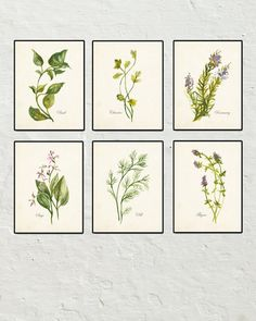 WATERCOLOR BOTANICAL HERBS SET NO. 2 CANVAS PRINT SET