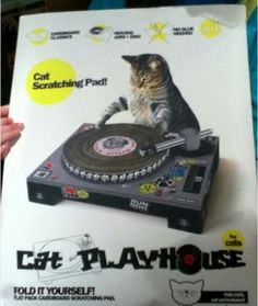 Paws the Music Cat Scratching Pad, I Love Cats, Cute Cats, Funny Cats, Epic Fail Pictures, Funny Cat Pictures, Random Pictures, Crazy Cat Lady, Crazy Cats, Cat Playhouse