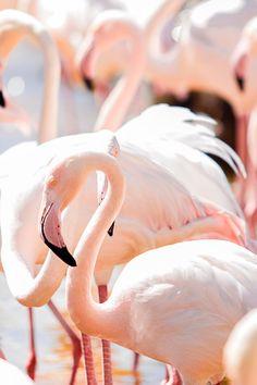 Beauty & Happy — expressions-of-nature: Flamingo by: Hamdan Owidah Flamingo Beach, Flamingo Art, Pink Flamingos, Animals Of The World, Animals And Pets, Cute Animals, Beautiful Birds, Animals Beautiful, Pink Bird