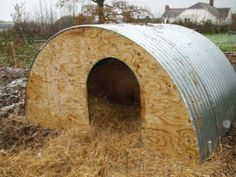 My sow was housed in a home-made ark made from wooden pallets and covered in old corrugated iron, but pigs being pigs she has been scratching herself against it and it was threatening to collapse. ...