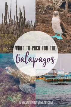 What to pack for the Galapagos Islands in Ecuador. Find out what to bring, what to leave at home, when the best time to visit the Galapagos Islands is, and other tips in this Galapagos packing list. Travel Advice, Travel Guides, Travel Tips, Travel Deals, Ecuador, Packing List For Travel, Packing Lists, Packing Hacks, Packing Cubes