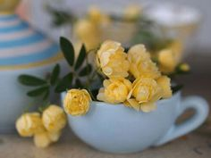 Yellow roses, teacup, photography