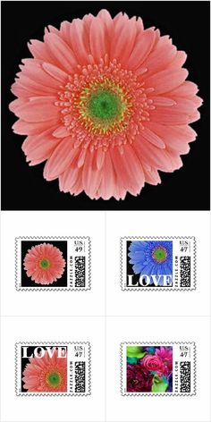 Daisies - Various Colors Types: A variety of customizable / personalizable, daisies, gerbera daisies, and daisy and gerbera daisy themed wedding, bridal shower, engagement, party, birthday party, and other special event invitations, announcements, save the date / save the dates, announcements, thank yous / thank you notes, postage stamps, stickers, seals, napkins, ties, cuff links, and other coordinating items in a variety of colors, sizes, fonts, etc.