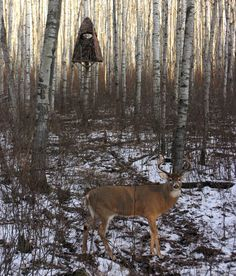10 Bowhunting Mistakes to Avoid in the Future