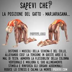 Posizione Del Gatto (Marjariasana) ✫♦๏☘‿SA Nov 30 , ༺✿༻☼๏♥๏写☆☀✨ ✤ ❀‿❀ ✫❁`💖~⊱ 🌹🌸🌹⊰✿⊱♛ ✧✿✧♡~♥⛩ 💓🌸💓 ⚘☮️❋⋆☸️ ॐڿ ڰۣ(̆̃̃❤⛩✨真♣ ⊱❊⊰ 💐🌺💐✤. Wellness Fitness, Yoga Fitness, Health Fitness, Yin Yoga, Yoga Meditation, Hata Yoga, Yoga Muscles, Yoga Nidra, Yoga Positions