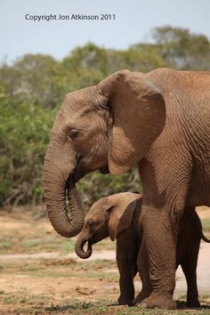 nature... mother-love
