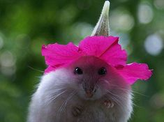 Flowerhead Mouse | Community Post: The Best Of Cutest Paw