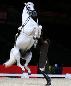 Wolfgang Eder, First Chief Rider, and horse Pluto Malina