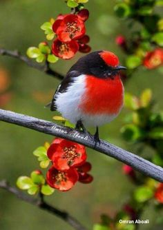 the bird #colorfulbird #beautifulbird Woodpecker
