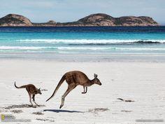 Kangaroo on the beach :)