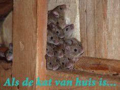 Als de kat van huis is, dansen de muizen op tafel. #woonspreuk #leukespreuken