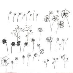 Image result for botanical line drawing flowers
