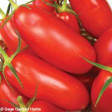 Sage Garden Herbs - Tomato, San Marzano OG