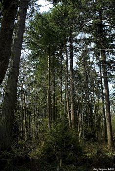 The Northwest wilderness <3