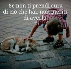 Permit the dogs to roam freely everywhere Rumi Quotes, Peace Quotes, Pet Shop Online, Street Dogs, Dog Friends, Compassion, Animals And Pets, Dog Cat, Corgi