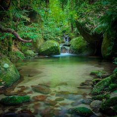 Mossman Gorge located in the Daintree rainforest Queensland Australia…""