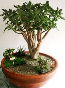 jardines en miniatura - Buscar con Google