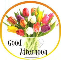 Good Afternoon   Good Afternoon Pictures, Images, Scraps for Facebook, Myspace,Hi5