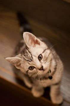 """""""An inquisitive little kitten is the best reminder of what youth is all about."""" --Jo Kittinger"""