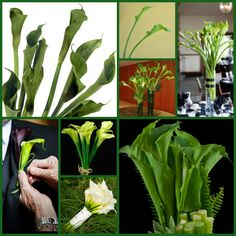 #Green #Calla #Lily #Wedding #Flowers #Florists #Floral #Spring #Blossom #Buds #Seeds #Garden #Gardening #Bouquets #Botanic #Gardens #Nature -- Click to see full size image at http://partymotif.com