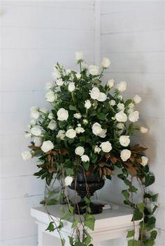 An abundance of white roses.