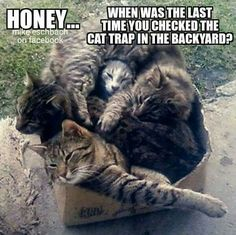 Honey... When was the last time you checked the cat trap in the backyard?