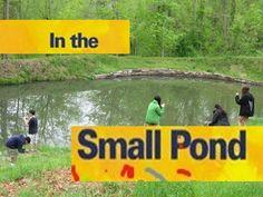Pond Ecosystem for kids