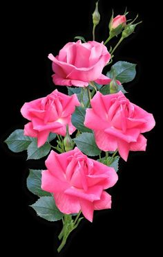 Beautiful Flowers Wallpapers, Beautiful Rose Flowers, My Flower, Pretty Flowers, Flower Vases, Flower Power, Flower Arrangements, Pink Roses, Pink Flowers
