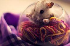 30 фотографий очень милых хомячков