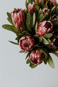 Proteas: Change, transformation, and courage. Pink Proteas by ashleyschulman on Seasonal Flowers, Fall Flowers, Flowers Nature, Beautiful Flowers, Wedding Flowers, Green Nature, Flower Power, Protea Flower, Protea Art