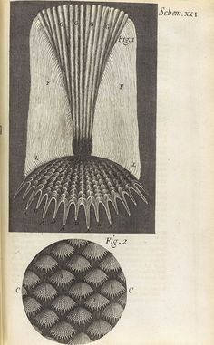 Micrographia: or Some Physiological Descriptions of Minute Bodies made by Magnifying Glasses by Robert Hooke, 1665