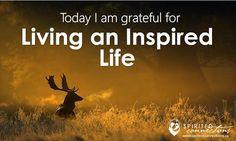 Today I am #grateful for #living an inspired life!  #gratitude #thankyou #thanks #thankful #deer #photooftheday #photography #photo #dailyinspiration #daily #sundayvibes #sunday #sundayfunday #angel #mist #motivated #motivationalquotes #motivation #positivevibes #positivity #happiness #happy