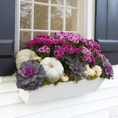 Give your fall window boxes a sophisticated burst of color with seasonal greenery, gourds and color mums in similar hues. Multi-colored cabbages with dark leaves and pink centers are a great complemen Fall Window Boxes, Window Box Flowers, Window Ideas, Fall Flower Boxes, Fall Flowers, Fall Mums, Fall Containers, Succulent Containers, Container Flowers