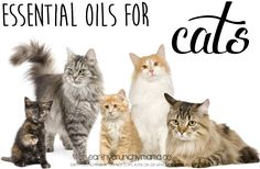 Essential Oils for Cats - www.youngliving.com sponsor/enroller # 1732182