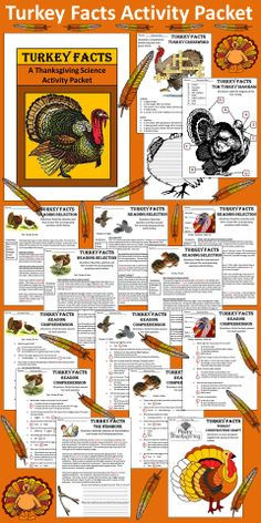 Turkey Facts: This colorful Thanksgiving Turkey Facts activity packet provides loads of information on the iconic bird of the season.  Contents include: * Five Reading Selections on the Turkey and Common Misconceptions * One Turkey Anatomical Diagram * One Turkey Crossword Puzzle * One Writing Activity Exploring the Turkey's Potential as a National Symbol * One Reading and Writing Activity on the Wishbone * One Turkey Construction Craft * Three Coloring Sheets * Answer keys