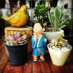 a bird, a japanese girl, and several succulents