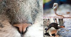 20 datos curiosos y extraños del mundo animal