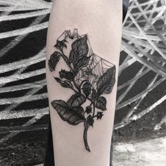 On Zoé, and tiny spider, thanks for. Pretty Tattoos, Cute Tattoos, Leg Tattoos, Beautiful Tattoos, Body Art Tattoos, Sleeve Tattoos, Piercings, Piercing Tattoo, Spider Web Tattoo