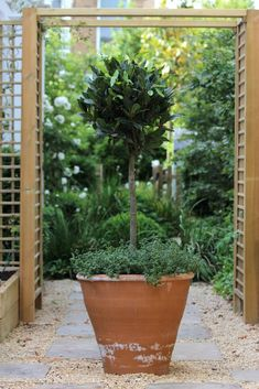Top 10 best trees for small gardens - Living Colour Gardens Small Trees For Garden, Small City Garden, Small Garden Design, Garden Trees, Back Gardens, Small Gardens, Courtyard Gardens, Patio Gardens, Dutch Gardens