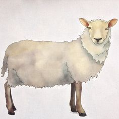 Working on a few new #illustrations today starting with this lovely #sheep... Ceridwen Hazelchild Design