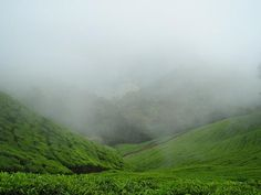 monsoon-munnar-tourism