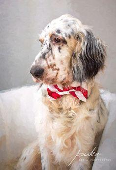 English Setter puppy digital painting. Pouka Art & Photography. www.pouka.com