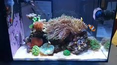 Love the flow of this nano reef tank Saltwater Aquarium Setup, Coral Reef Aquarium, Saltwater Fish Tanks, Marine Aquarium, Aquarium Fish Tank, Marine Fish Tanks, Marine Tank, Biorb Fish Tank, Reef Aquascaping