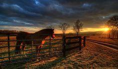 Lovettsville, Va. Amazing sunset and awesome horse