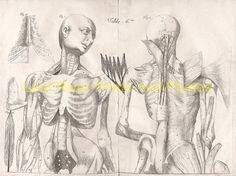 new to site Anatomy – Ame Bourdon 1678f