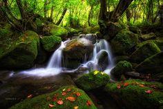 Waterfall in Sandong - 상동 이끼계곡의 계류