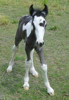 Foal with heart!