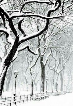 Winter | Central Park snowbound | You can you hear the silence