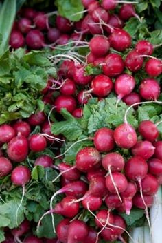 For fall planting: Beets, calendula, cilantro, kale, lettuce, peas, radish, salad greens, spinach and Swiss chard. And for areas with mild winters: broccoli, carrots, cabbage and arugula, onions, leeks, and parsley. Look for fast maturing varieties.