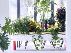 Stoer groen moet je doen, alleen al omdat je huis er van opknapt. En dat het ook nog eens positief uitstraalt op je imago, is uiteraard mooi meegenomen…